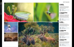 N-Photo Photographer of the year competition - 7th Place - Wildlife - July 2019